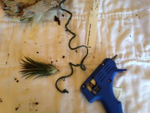 Mounting the air plant