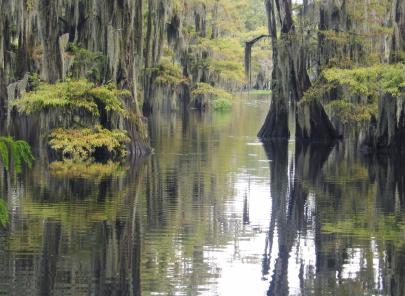 Spanish Moss Swamp