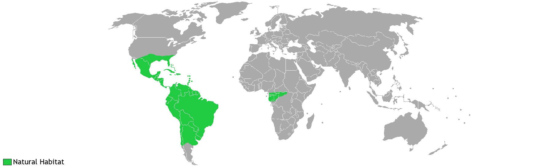 World Bromeliad Distribution
