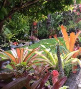 Bromeliad of the Week
