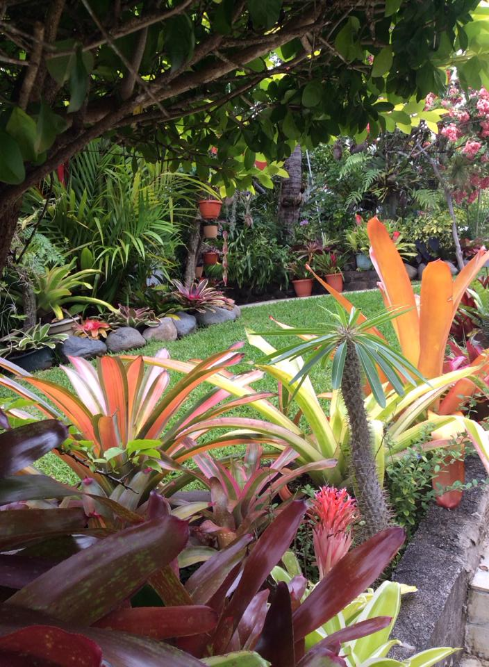 Bromeliads How To Keep The Color Going: Bromeliad Plant Care